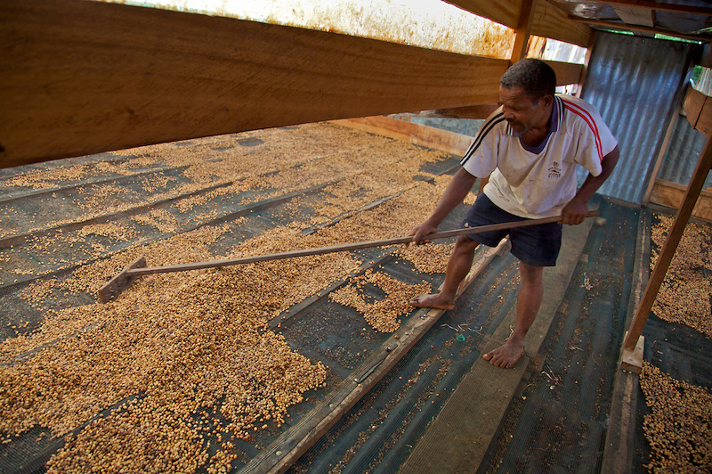 Coffee Bean Drying