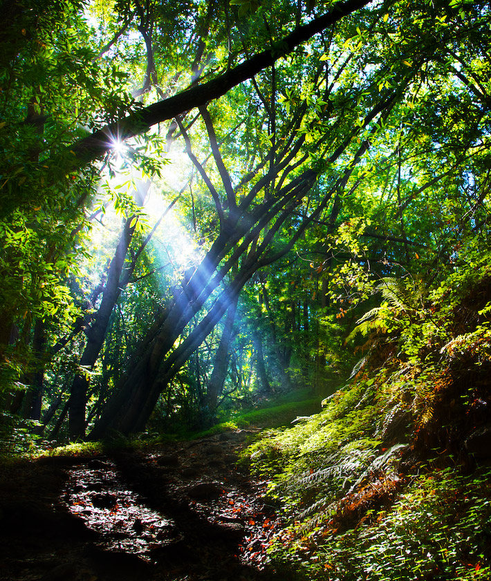 Forest Light Rays - Pfeiffer Big Sur State Park, CA