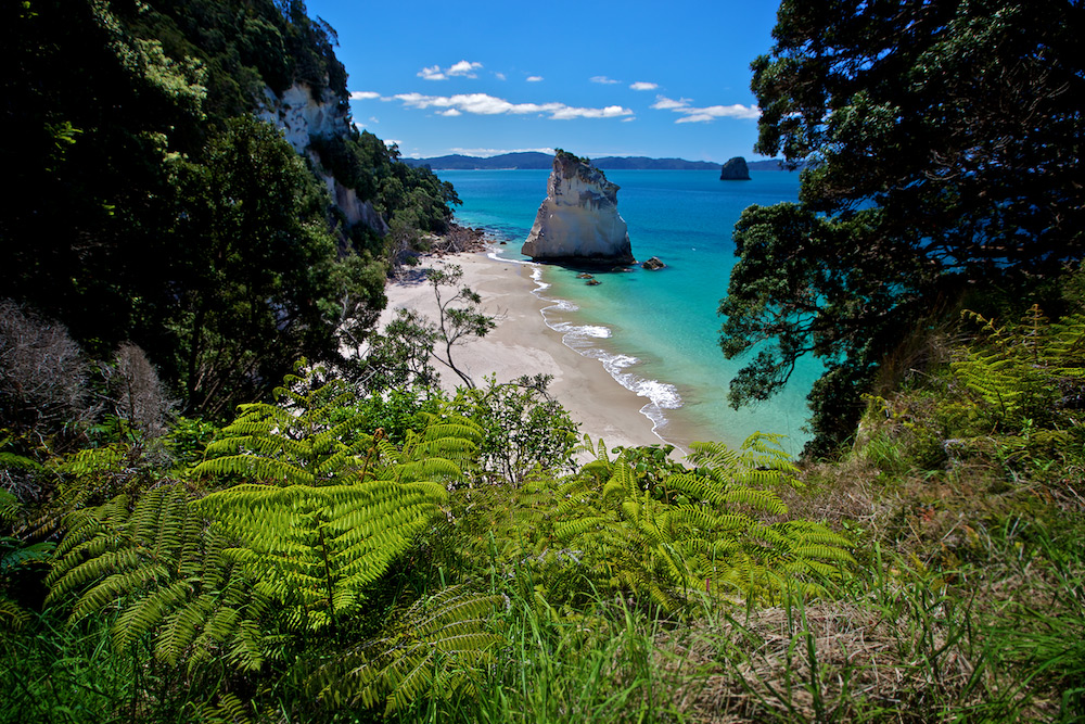 Te Hoho Rock: Cathedral Cove - Coromandel Peninsula New Zealand