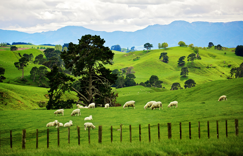 Approaching hobbiton matamata new zealand photo by for Nz landscape