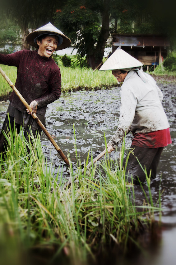 Filipinas working in the rice paddies - Bagabag, Luzon, Philippines