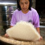 Winnowing Rice by Hand - Rice Preparation in Indonesia