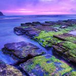 Sydney Seascape at Dawn - Turimetta Beach, NSW Australia